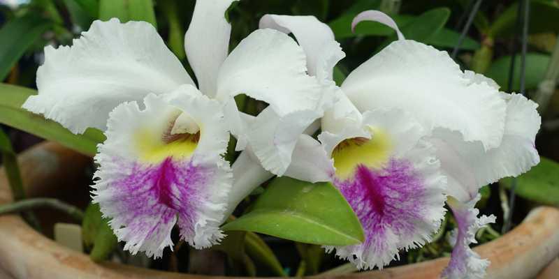 Photo d'orchidée