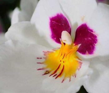Acheter une orchidée, le guide pratique