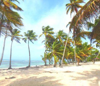 Guadeloupe : visiter Grande Terre