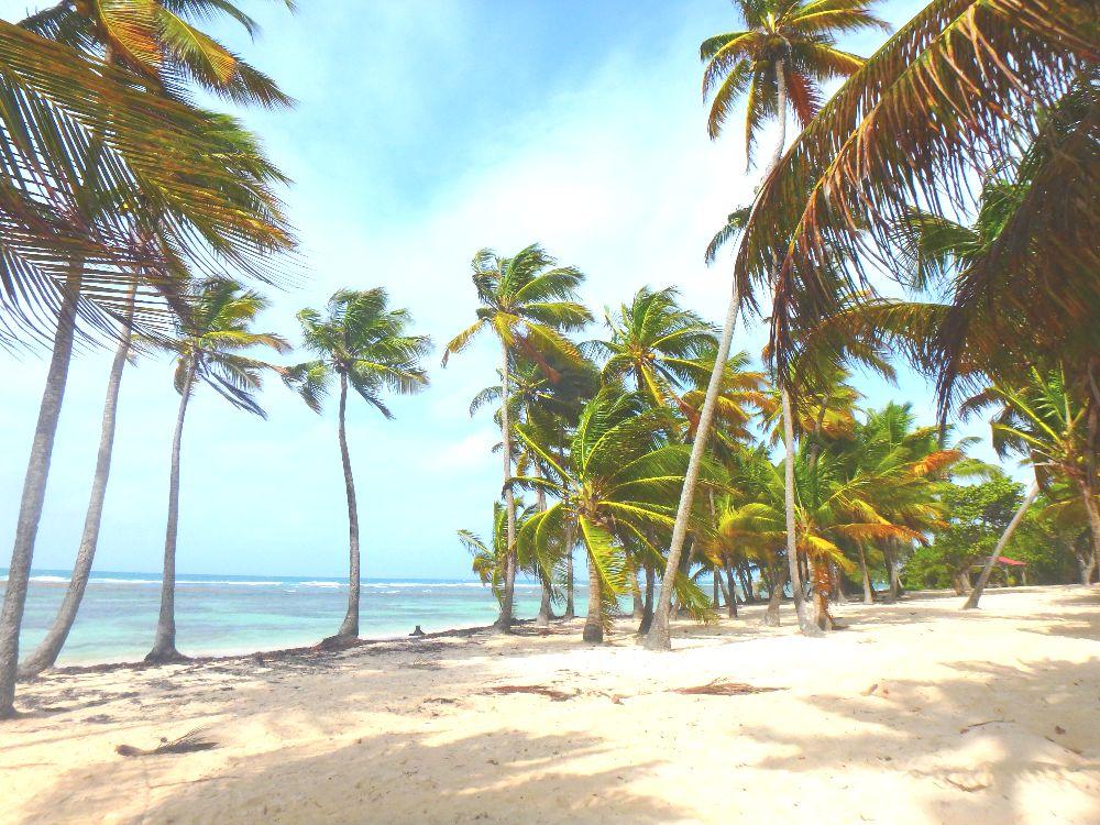 La plage de Saint Anne à Grande Terre, en Guadeloupe